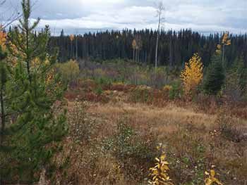 Bow Hunting Moose Habitat