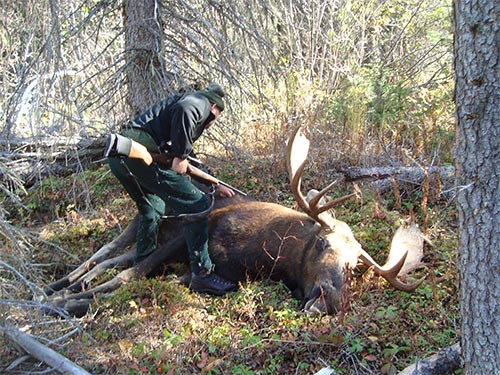 Fred's moose checking the shot