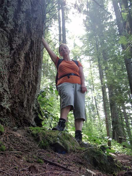 Giant Fir Tree