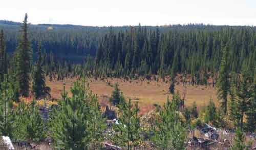 A prime example of Moose Habitat