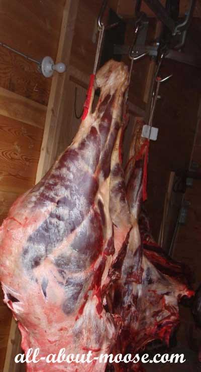 Dry Aging Moose Meat