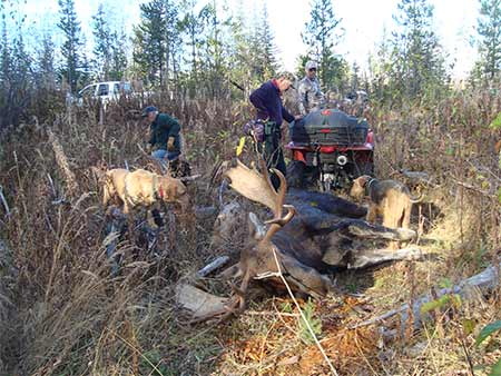 Archery Moose Hunt - Freds Moose