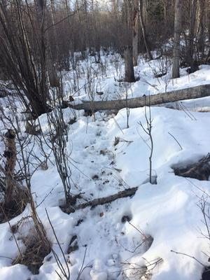 Follow this trail to find some moose sheds! <br/> <i>Photo credit Stan Tarangle</i>