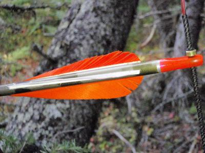 Feather Fletching
