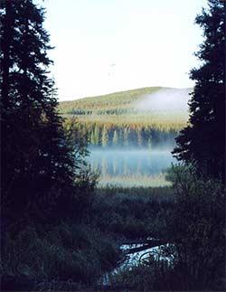 Bow hunting moose lake habitat