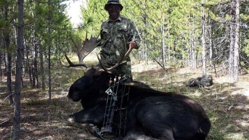 Bow Hunting Moose