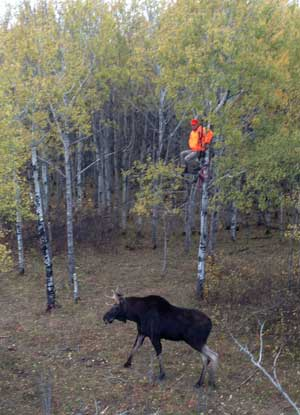 Double Tree Stands for Moose Hunting