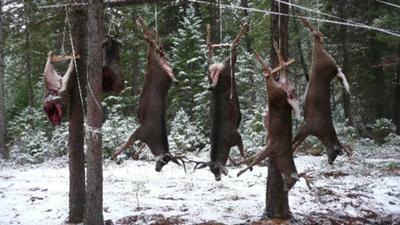 Successful Deer Hunt