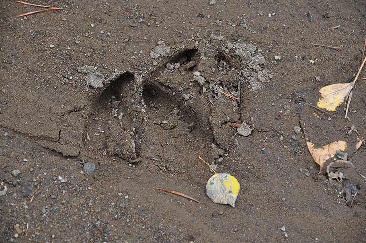 Moose Hunt 2011