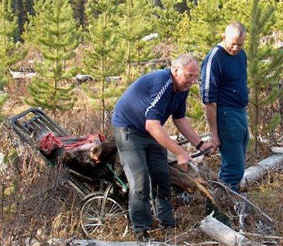 Getting a moose out of the bush using a game cart
