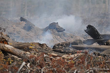 Habitat Destruction Burning