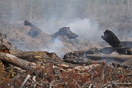 Habitat Destruction Burning
