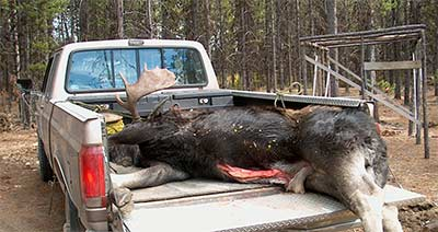 Yes, we do bring our Moose back in one piece!