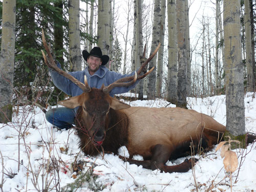 Hunt Big Elk in Central BC