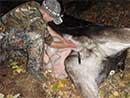 moose field dressing