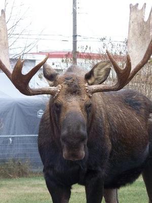 Anchorage Alaska (<i>Corey Imlah photo</i>)