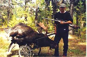 Moose on Cart