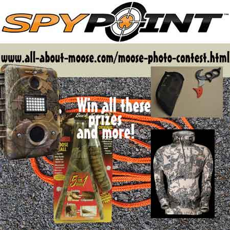 Moose Photo Contest Prizes