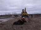 Moose rescue excavator with grapple lifts moose out of mud