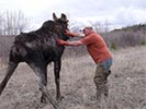 Moose rescue standing with help