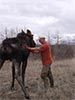 Moose rescue standing with little help