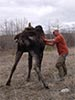 moose rescue still standing with help