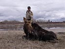 Moose rescue supporting moose