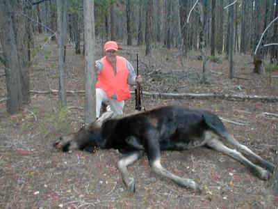 My Dad S Trophy Cow Moose Hunt In Colorado