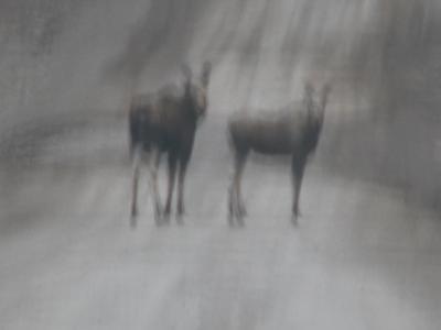 Mystical Moose
