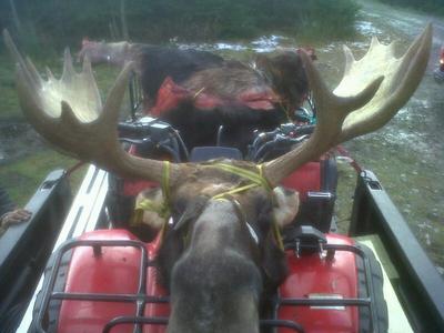 Nicest Moose Rack Ever