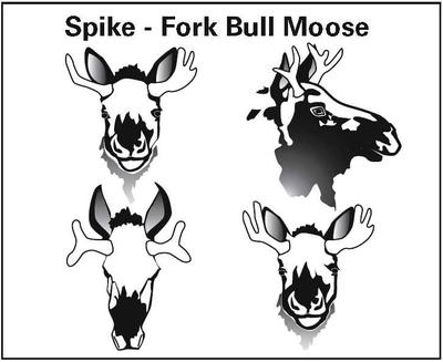 Spike Fork Moose Regulation - Picture from BC Hunting Regulations