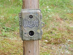 Spypoint Trail Camera IR-7 Mounted on Tree for Moose Hunting