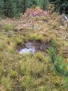 Abandonded Rut Pit