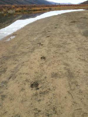 Tracking Moose
