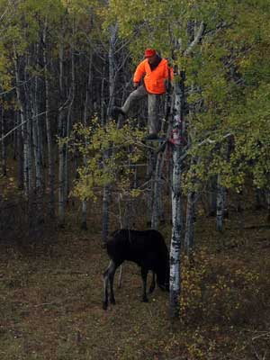 Moose Treestand Hunting Vantage Point