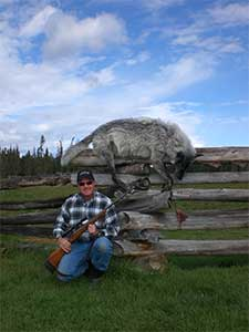 Big Country Outfitters Big Gray Wolf