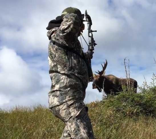 Archery Moose Hunting