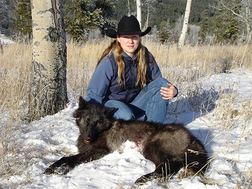 Wolves Affect Moose Population Trends