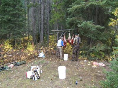 Elk Quarters Hanging at Camp