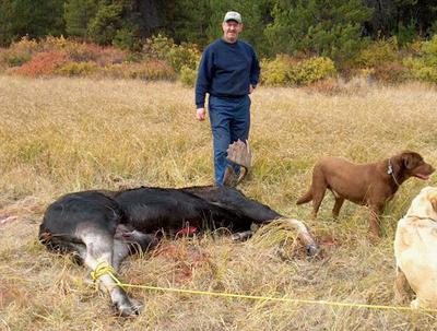 Use a rope to retrieve your moose from the bush