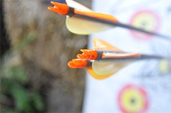 Gold Tip Arrows Grouping
