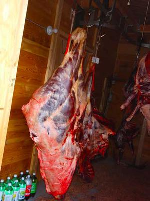 Moosemeat - Ready for grading?