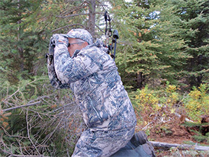 Look for moose in good habitat