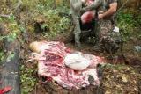 Moose Offal