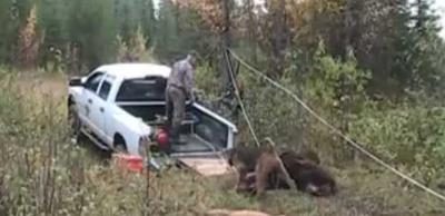 Loading a Moose into a Truck