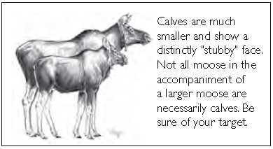 Cow and calf moose comparision