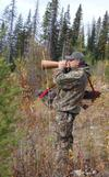 Call for moose using a birch bark moose call