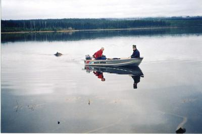 Towing a moose in the water