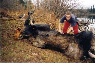 Once you have your moose to shore